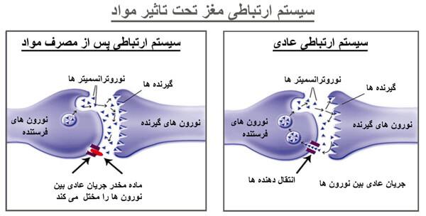 سیستم-ارتباطی-مغز-قبل-بعد-مصرف-وب